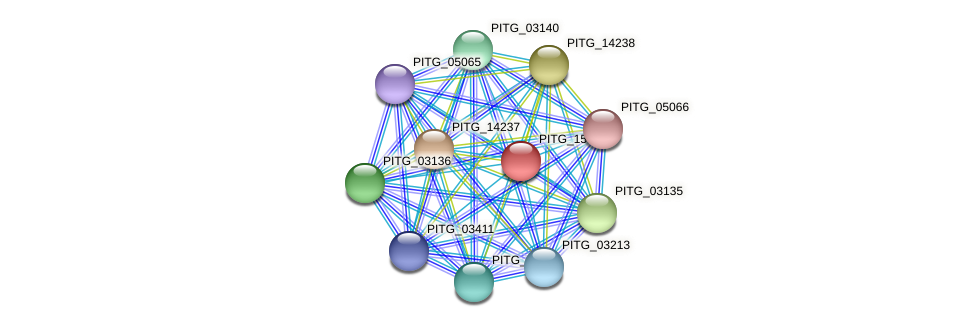 PITG_15980 protein (Phytophthora infestans) - STRING interaction network
