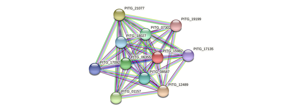 PITG_15982 protein (Phytophthora infestans) - STRING interaction network