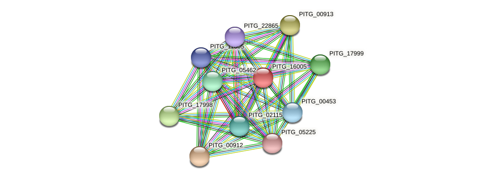 PITG_16005 protein (Phytophthora infestans) - STRING interaction network