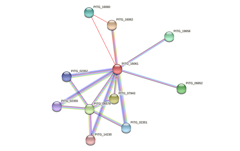 PITG_16061 protein (Phytophthora infestans) - STRING interaction network