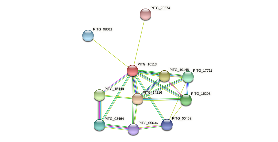 PITG_16113 protein (Phytophthora infestans) - STRING interaction network