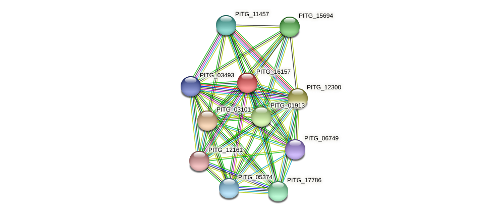 PITG_16157 protein (Phytophthora infestans) - STRING interaction network