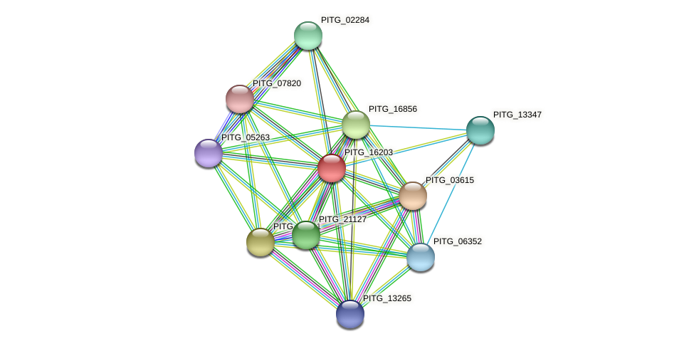 PITG_16203 protein (Phytophthora infestans) - STRING interaction network