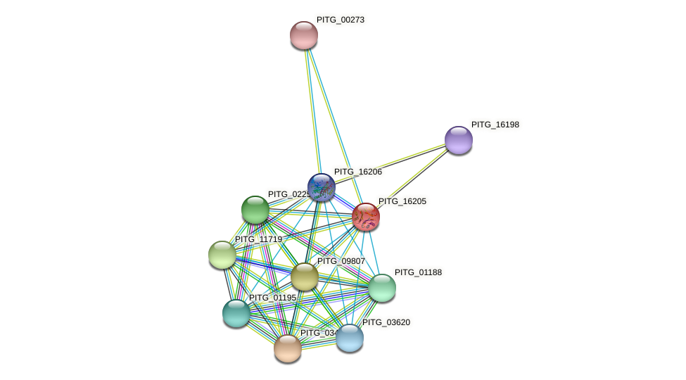 PITG_16205 protein (Phytophthora infestans) - STRING interaction network