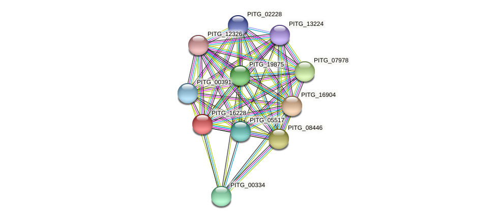 PITG_16228 protein (Phytophthora infestans) - STRING interaction network