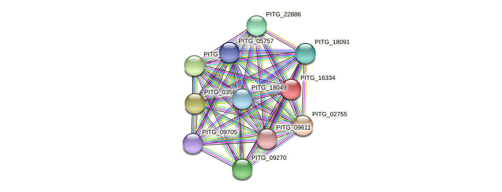 PITG_16334 protein (Phytophthora infestans) - STRING interaction network