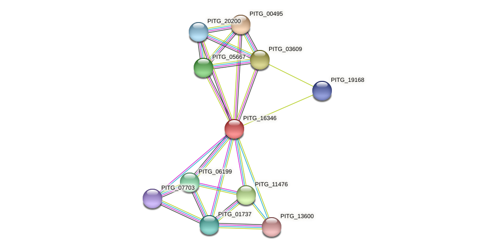 PITG_16346 protein (Phytophthora infestans) - STRING interaction network
