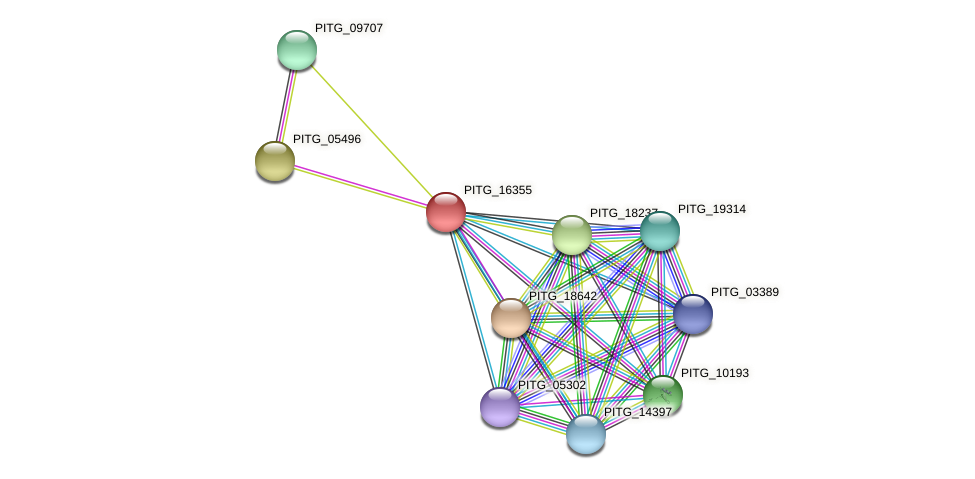 PITG_16355 protein (Phytophthora infestans) - STRING interaction network