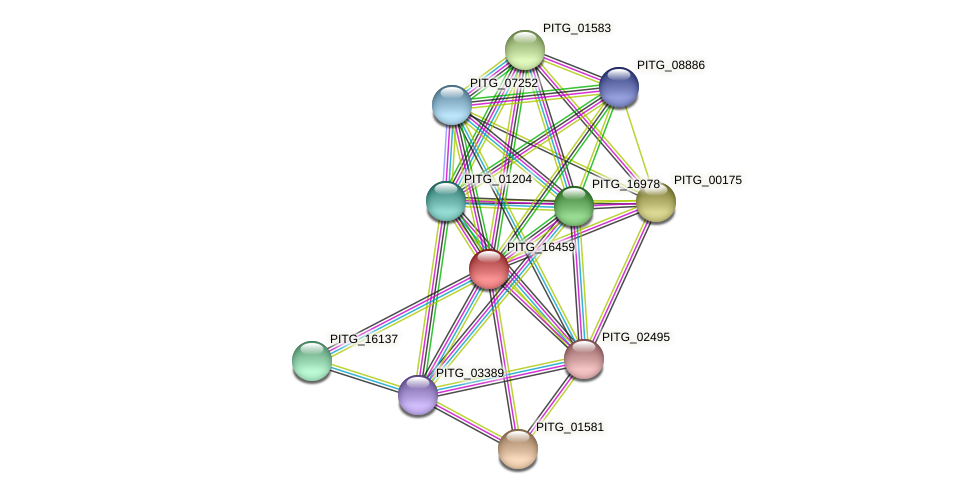 PITG_16459 protein (Phytophthora infestans) - STRING interaction network