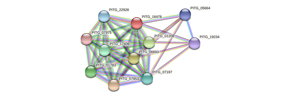 PITG_16478 protein (Phytophthora infestans) - STRING interaction network