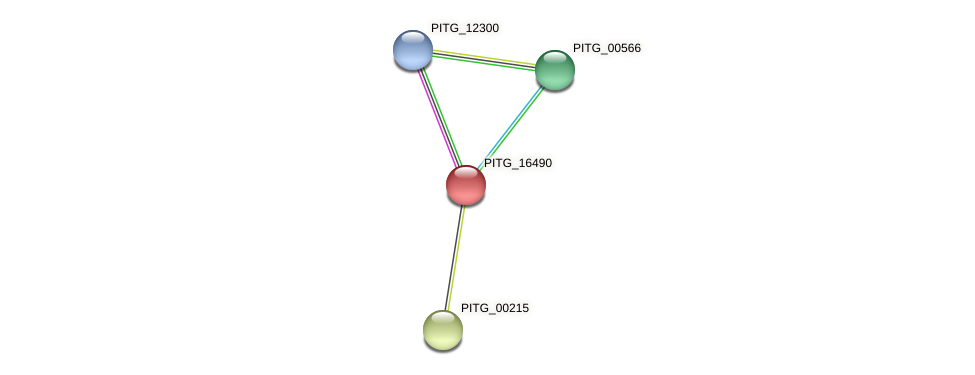 PITG_16490 protein (Phytophthora infestans) - STRING interaction network