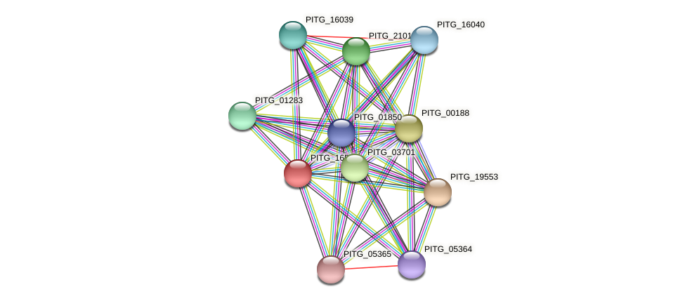 PITG_16513 protein (Phytophthora infestans) - STRING interaction network