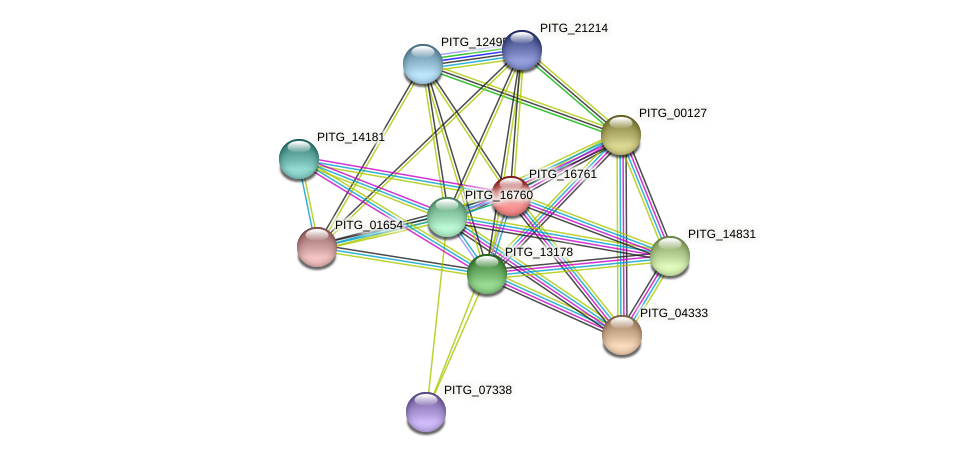 PITG_16761 protein (Phytophthora infestans) - STRING interaction network