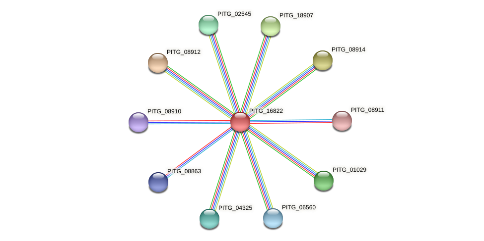 PITG_16822 protein (Phytophthora infestans) - STRING interaction network
