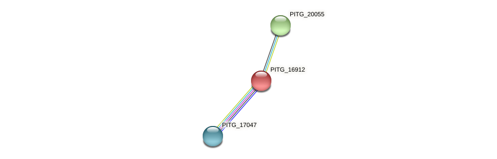 PITG_16912 protein (Phytophthora infestans) - STRING interaction network
