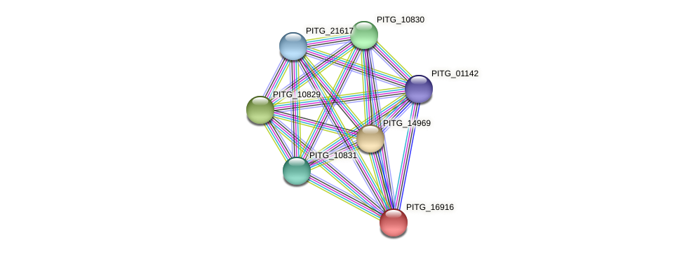 PITG_16916 protein (Phytophthora infestans) - STRING interaction network