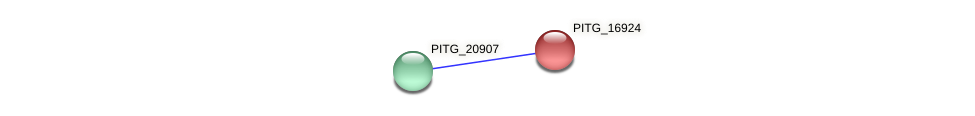 PITG_16924 protein (Phytophthora infestans) - STRING interaction network