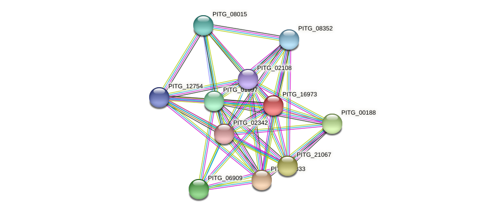 PITG_16973 protein (Phytophthora infestans) - STRING interaction network