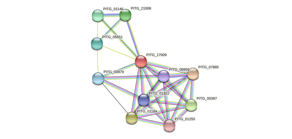 PITG_17009 protein (Phytophthora infestans) - STRING interaction network
