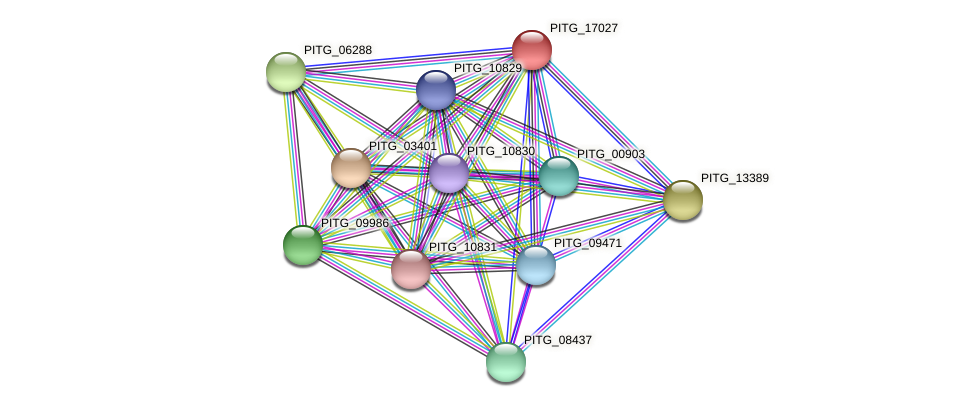 PITG_17027 protein (Phytophthora infestans) - STRING interaction network