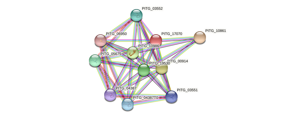 PITG_17070 protein (Phytophthora infestans) - STRING interaction network