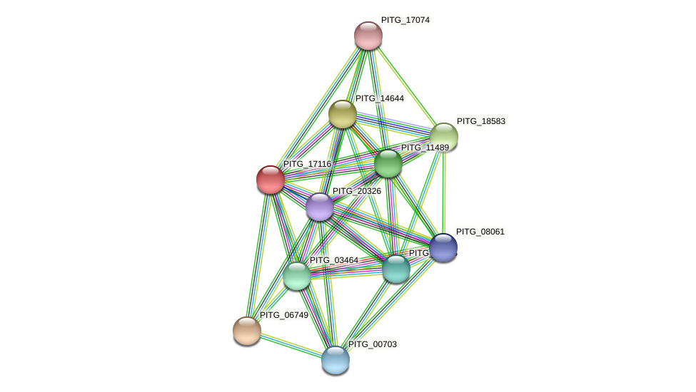 PITG_17116 protein (Phytophthora infestans) - STRING interaction network