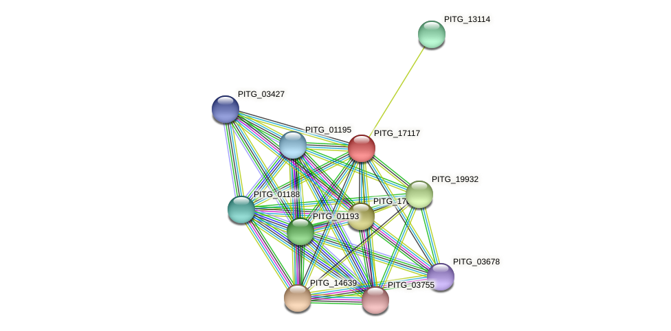 PITG_17117 protein (Phytophthora infestans) - STRING interaction network