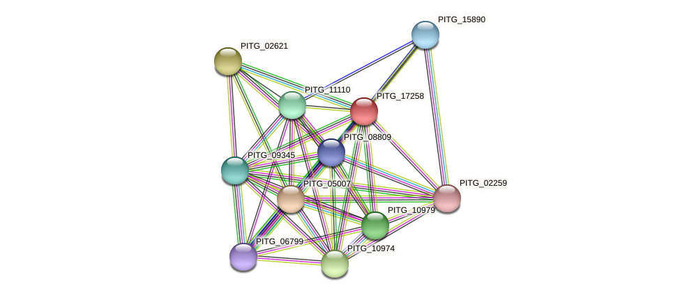 PITG_17258 protein (Phytophthora infestans) - STRING interaction network