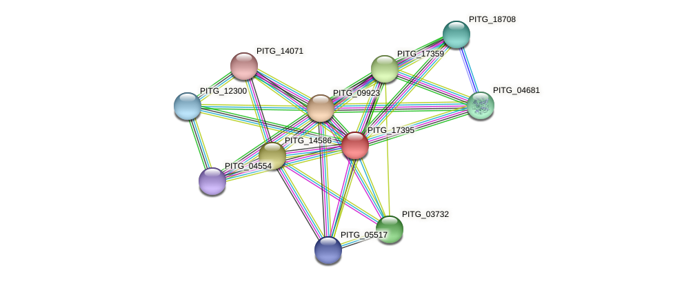 PITG_17395 protein (Phytophthora infestans) - STRING interaction network