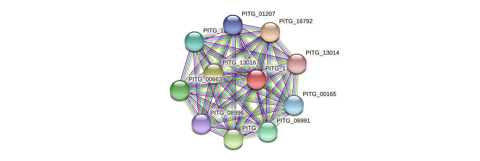 PITG_17404 protein (Phytophthora infestans) - STRING interaction network