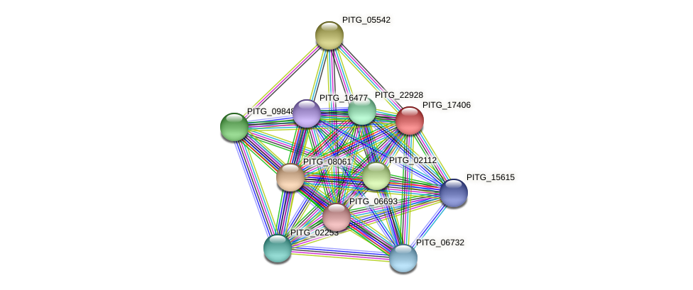 PITG_17406 protein (Phytophthora infestans) - STRING interaction network