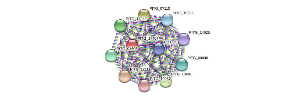 PITG_17407 protein (Phytophthora infestans) - STRING interaction network