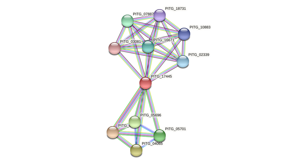 PITG_17445 protein (Phytophthora infestans) - STRING interaction network