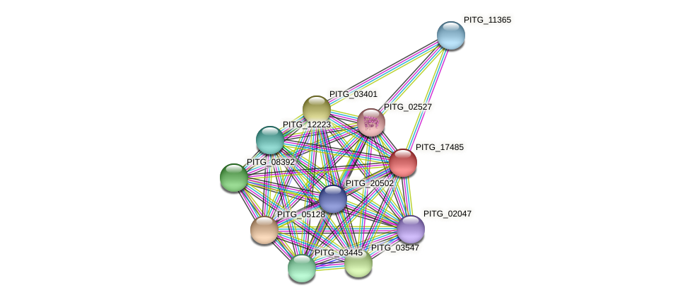 PITG_17485 protein (Phytophthora infestans) - STRING interaction network