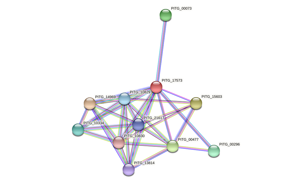 PITG_17573 protein (Phytophthora infestans) - STRING interaction network