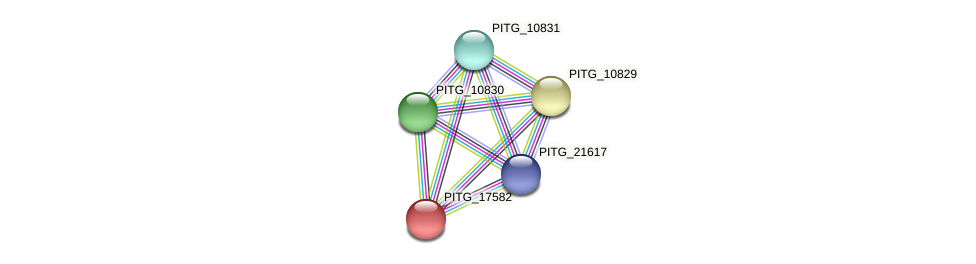 PITG_17582 protein (Phytophthora infestans) - STRING interaction network