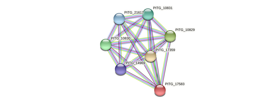 PITG_17583 protein (Phytophthora infestans) - STRING interaction network