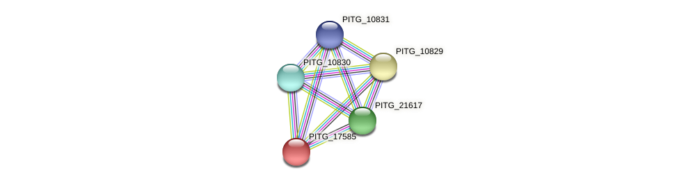 PITG_17585 protein (Phytophthora infestans) - STRING interaction network