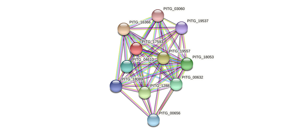 PITG_17593 protein (Phytophthora infestans) - STRING interaction network