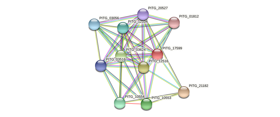 PITG_17599 protein (Phytophthora infestans) - STRING interaction network