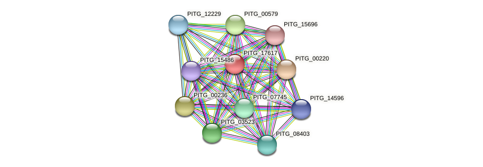 PITG_17617 protein (Phytophthora infestans) - STRING interaction network
