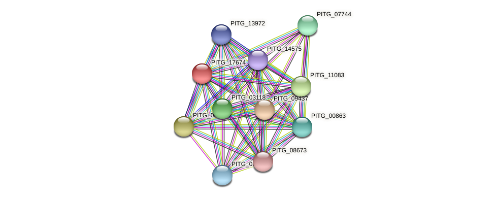 PITG_17674 protein (Phytophthora infestans) - STRING interaction network