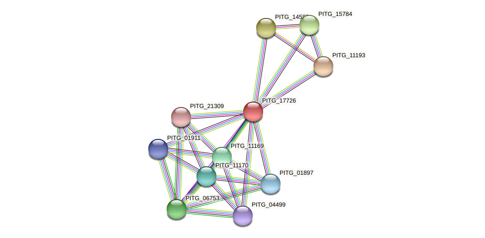 PITG_17726 protein (Phytophthora infestans) - STRING interaction network