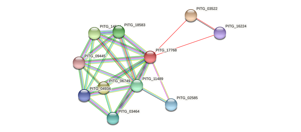 PITG_17768 protein (Phytophthora infestans) - STRING interaction network
