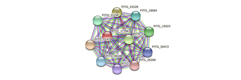 PITG_17788 protein (Phytophthora infestans) - STRING interaction network