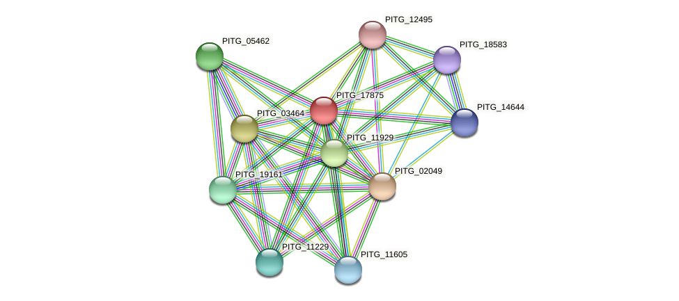 PITG_17875 protein (Phytophthora infestans) - STRING interaction network