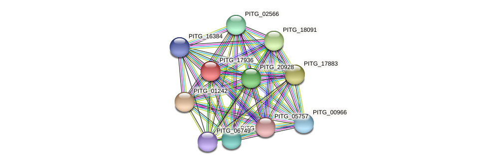 PITG_17936 protein (Phytophthora infestans) - STRING interaction network