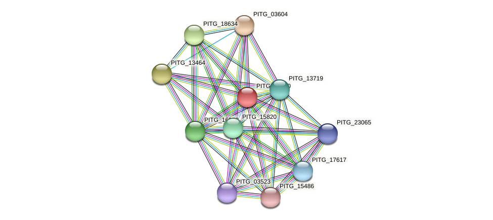 PITG_17950 protein (Phytophthora infestans) - STRING interaction network
