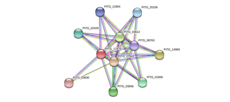 PITG_17975 protein (Phytophthora infestans) - STRING interaction network