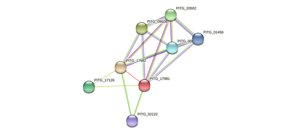 PITG_17981 protein (Phytophthora infestans) - STRING interaction network